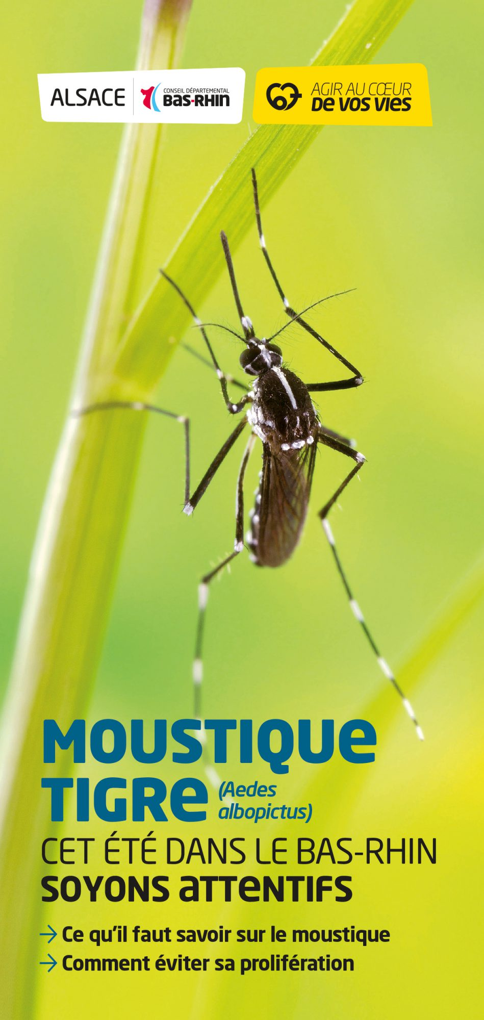 conseil-departemental-bas-rhin-moustique-tigre-ce-quil-faut-savoir-2018-1
